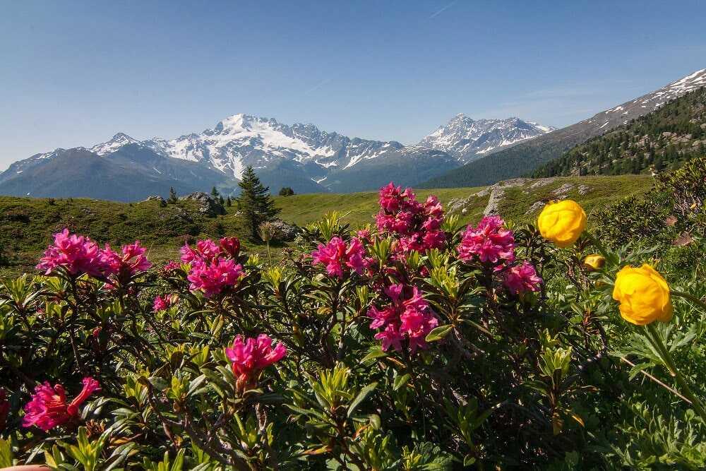 Scorcio panoramico della Val Vezzola, in Valdidentro