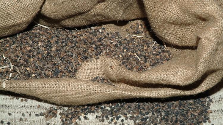 Il grano saraceno, tra i prodotti caratteristici della Valtellina, vanta numerose proprietà benefiche