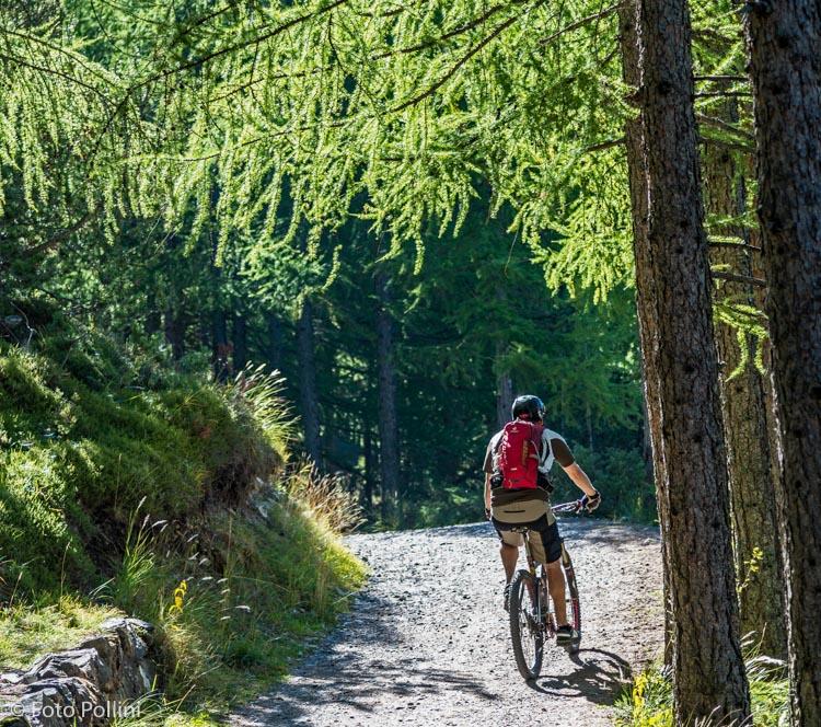 Nel bosco della Reit
