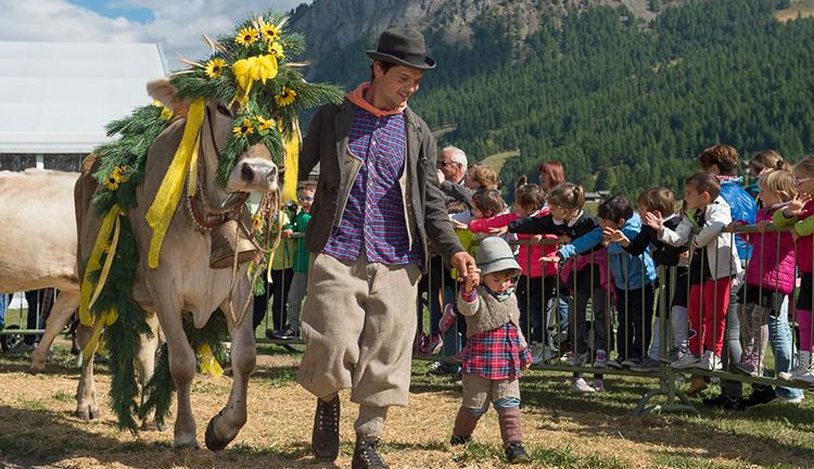 A Livigno durante l'Alpen Fest si celebra il ritorno del bestiame dagli alpeggi in quota
