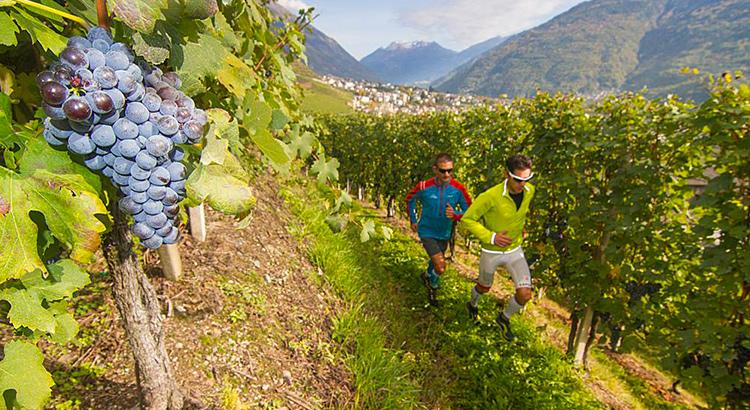 Il 4 novembre 2017 torna la Valtellina Wine Trail, la gara di corsa lungo i terrazzamenti della Valtellina