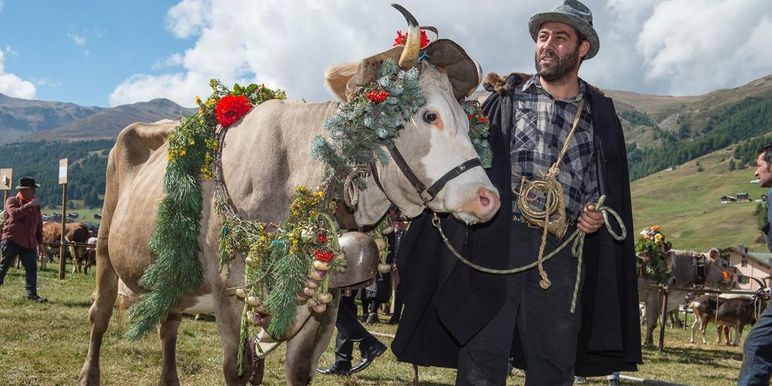 A settembre, in Valtellina, si celebra la transumanza, ossia il ritorno del bestiame e degli allevatori dagli alpeggi in quota