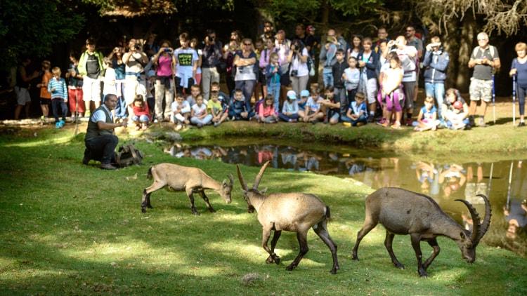 Ideale per famiglie, l'Osservatorio eco-faunistico di Aprica (SO) è un'area con un itinerario didattico che permette di osservare numerose specie animali da vicino