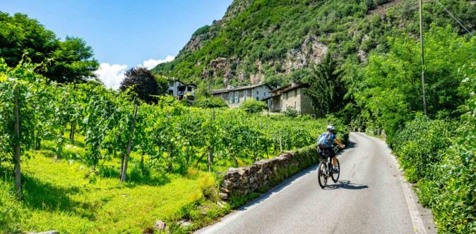 wine bike tour in montagna